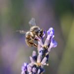 Milieux Naturels, Biodiversité