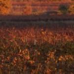 Patrimoine agricole