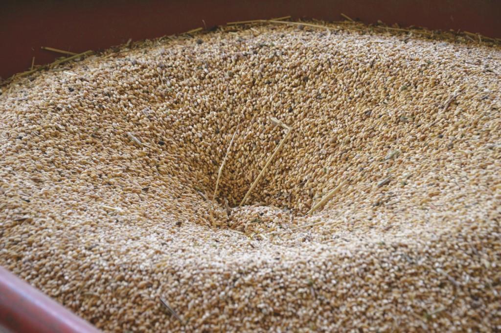 Stockage du blé chez Gérard Guillot avant transformation en farine (photo Hervé Vincent)
