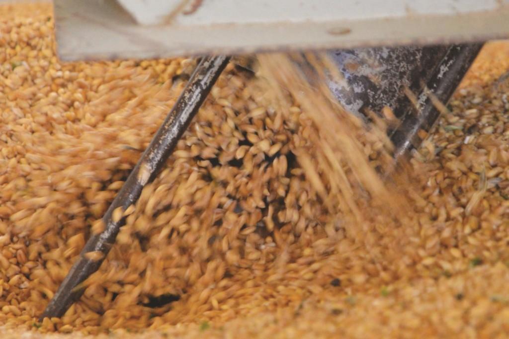 Tri du blé chez Gérard Guillot avant transformation en farine (photo Hervé Vincent)