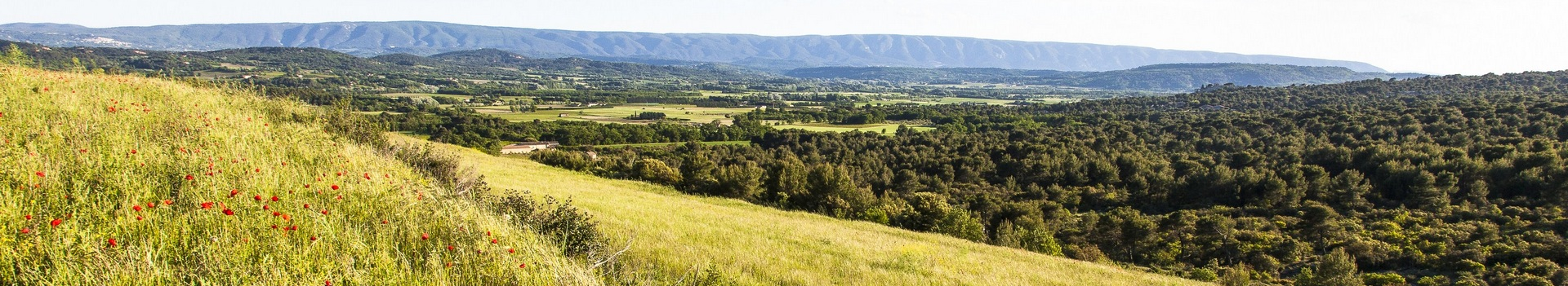 Forêt de Monts-de-Vaucluse et vallée du Calavon
