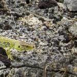 Milieux naturels et biodiversité