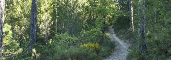 Forêt de Pélissier à Manosque © David Tatin