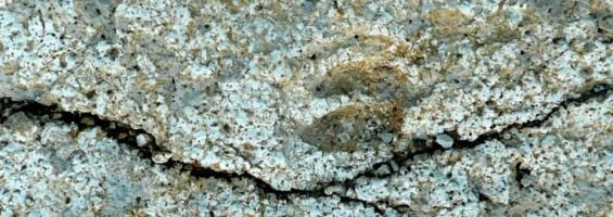 Dalle à empreintes de pas de mammifères de Viens (photo PNRL - Stéphane Legal)