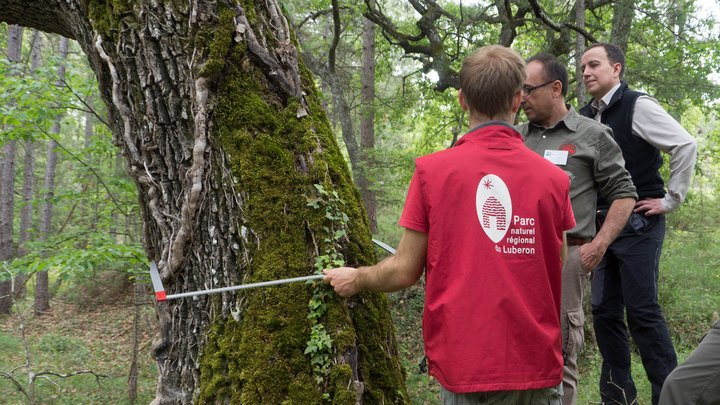 Mesure du diamètre d'un arbre avec un compas © PNRL-Aline Salvaudon