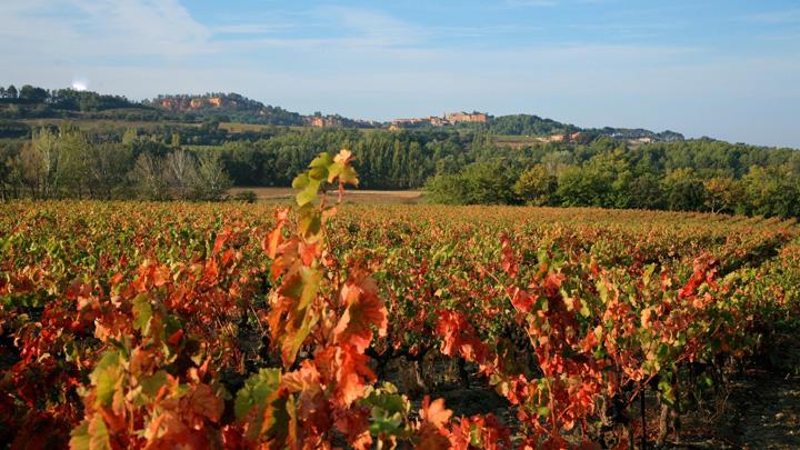 Vignes en automne à Roussillon (photo AVECC - Hervé Vincent)