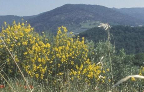 Adrets de Montjustin - Les Craux - Rochers et crêtes de Volx