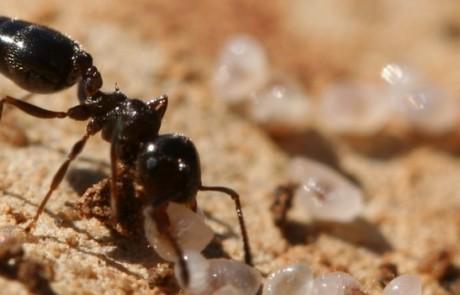 L'inventaire des fourmis de France