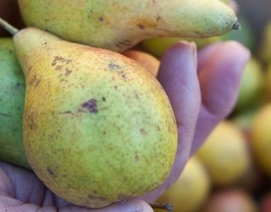 La Journée des fruits et saveurs d'autrefois