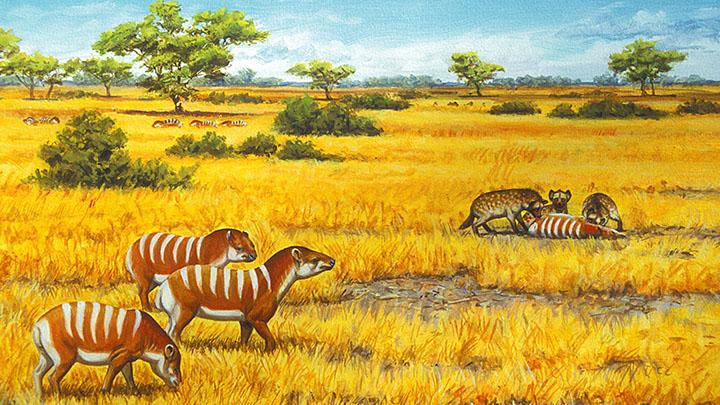 Paléopaysage de l'Eocène Dessin Aline Laage