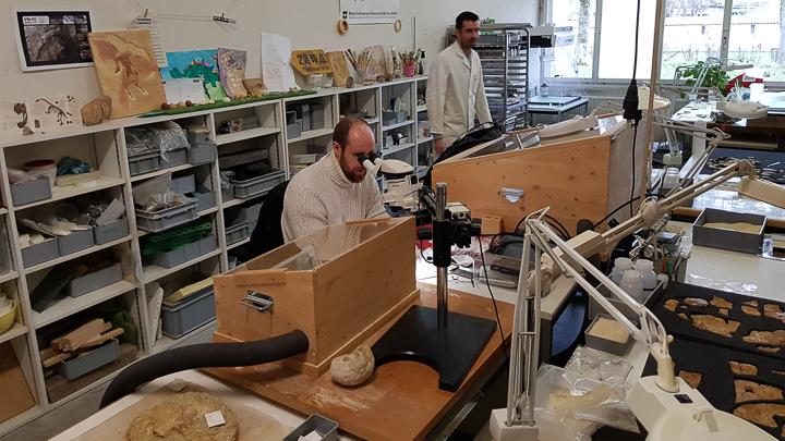 Laboratoire de préparation des fossiles du Jurassica Museum