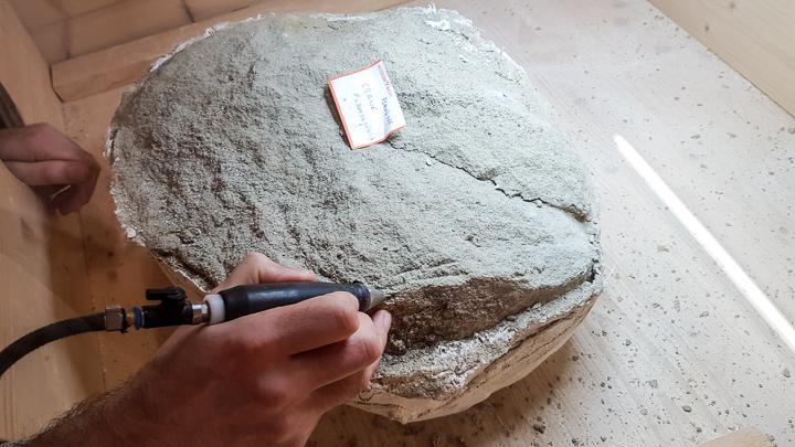 Début du dégagement d'un fossile de sa gangue de grès