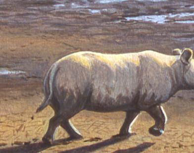 Explorez les traces de mammifères disparus